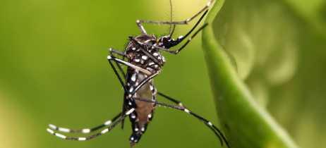 Malásia vai usar drones para ajudar no combate à Dengue