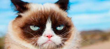 Morre Grumpy Cat, a celebridade felina favorita da internet