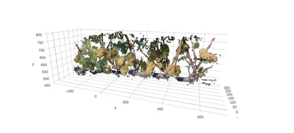 Cientistas brasileiros treinam robôs para identificar plantas automaticamente